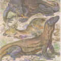 Гигантские вараны охотятся и на оленей