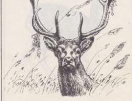 Бухарский олень хангул