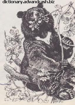 Желуди — излюбленный корм черного медведя