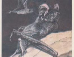 Широкоухий складчатогуб