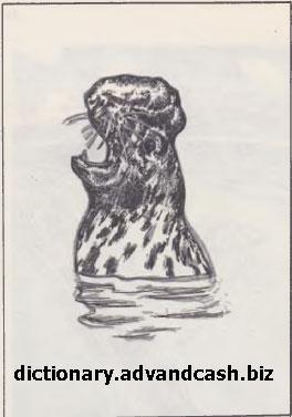 Тюлень-хохлач