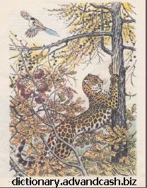 Восточно-сибирский леопард