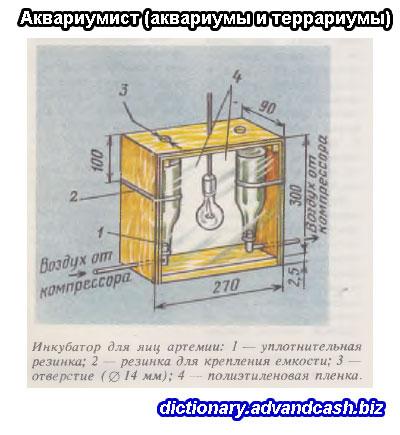 Инкубатор для яиц артемии