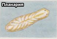 Планария